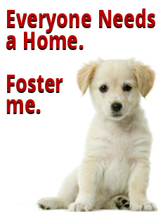 foster-me