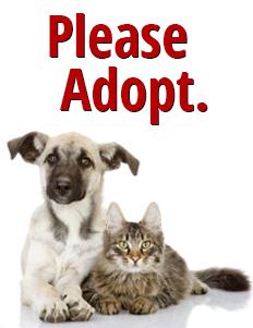 please-adopt
